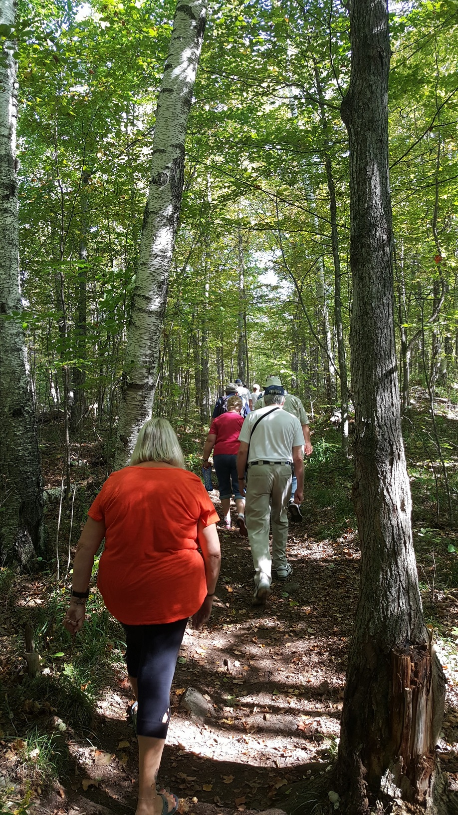 people walking on wooded trail