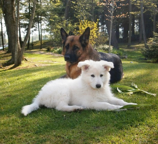 Dog and puppy lounging on grass