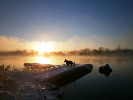 Dog on dock at sunset